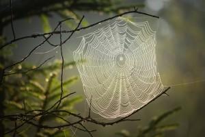 cobweb-4439844_1920
