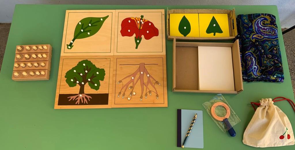 Inastri solidi Botanica Montessori